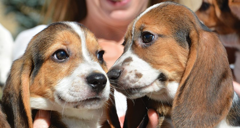 Pssst...I hear we're kind of a big deal Photo Credit: Mike Carroll/Cornell University College of Veterinary Medicine