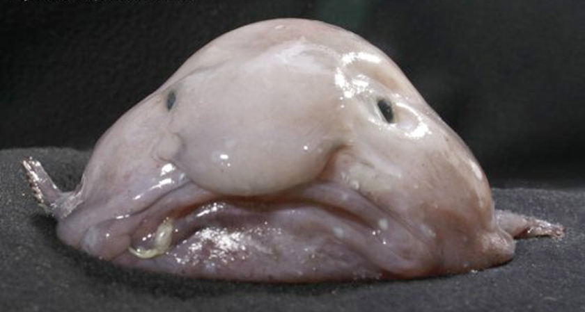 Amorphous carbon? Nope. Just a blobfish.